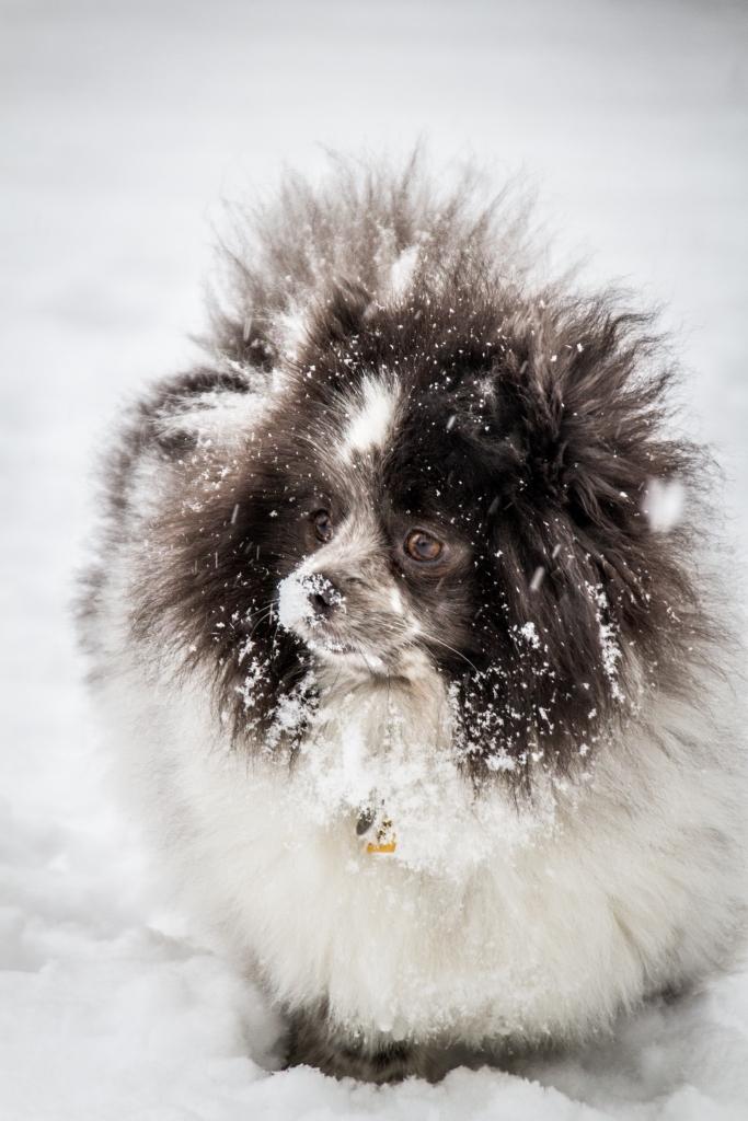 Snow 095-1