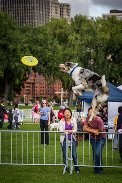 Flying dog!